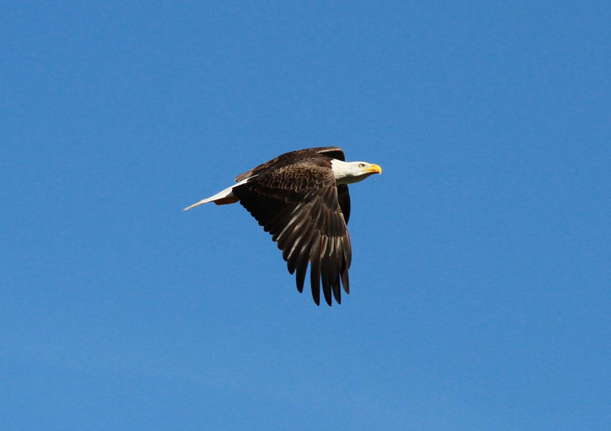 flight of eagles Eagle flight是全球领先的通用航空服务领域的专业公司,主要为国内外通用航空公司的商务飞行、急救飞行、要客飞行、以及.